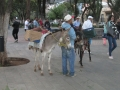 Esel an der Callejoneada